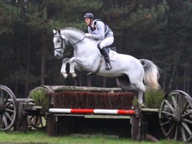 Grey Top XC stallion test
