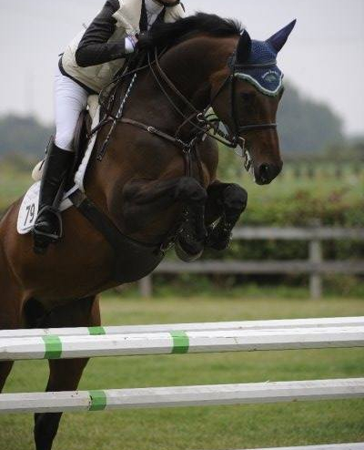 Cocarina (Coriano / Carolus I / Calypso II) 2002 HOLST Jumper mare, successful in sport, now expecting a July foal by Diamo Blue.