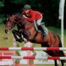 Damsire Quebec, 1.60m jumper by Quick Star