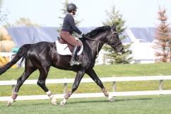 Jethro Tull; KWPN stallion